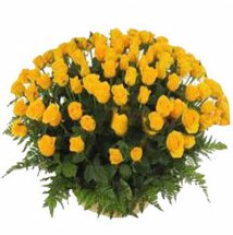 50 Yellow roses basket