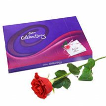 Cadburys celebration with 1 red rose