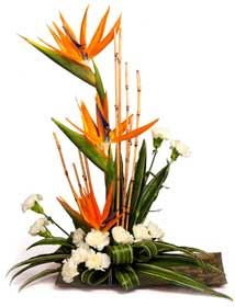 Bird of Paradise Arrangement with white carnations