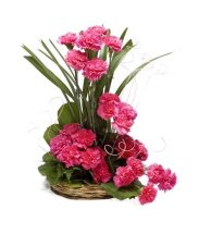 20 Pink Carnations Basket