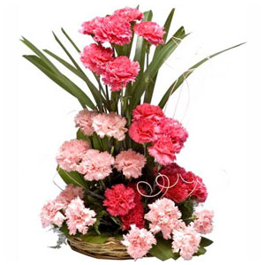 Light and Dark 20 Pink carnations basket
