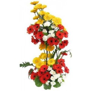24 Coloured gerberas in double basket arrangement