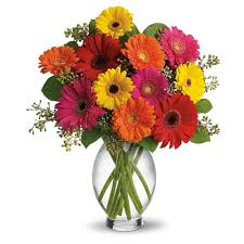 12 Mix Gerberas in vase