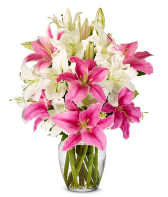 10 Pink and white Lilies Vase