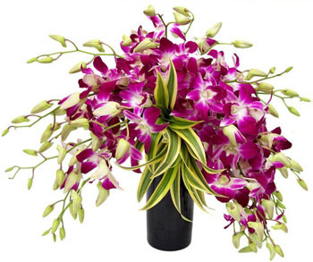 10 Purple Orchids in a Vase