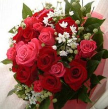 15 Pink and red roses