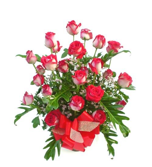 http://www.allindiaflowers.com/Images/roses31.jpg
