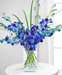 10 Blue Orchids in a Vase