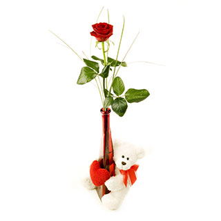 Single red roses in Vase and white teddy�(6 inches)