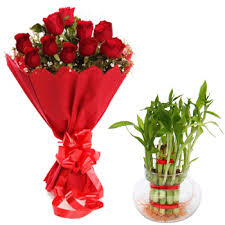 Good luck plant with 12 Red roses